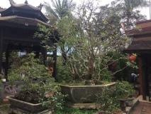Jardin-de-Hue