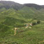 Cameron-Highlands (3)