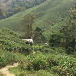 Cameron-Highlands (4)