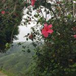 photos-de-cameron-highlands (1)