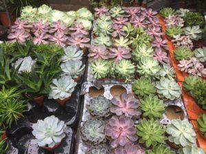 flower-market-londres-1