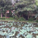 Lotus-Ubud (3)