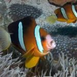fish(3)