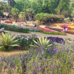 jardin-Mae Fa Luang(2)