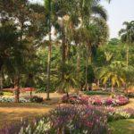 jardin-Mae Fa Luang(3)